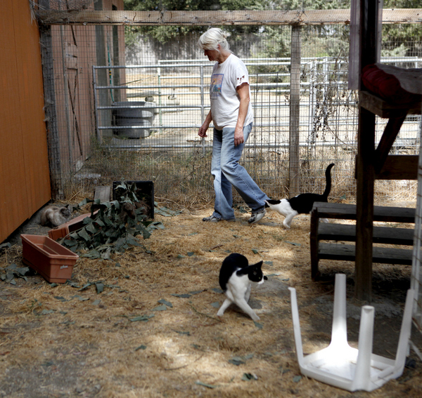 Susan Simmons walks through a transitional enclosure for feral cats at a barn relocation site. (Beth Schlanker / Press Democrat)