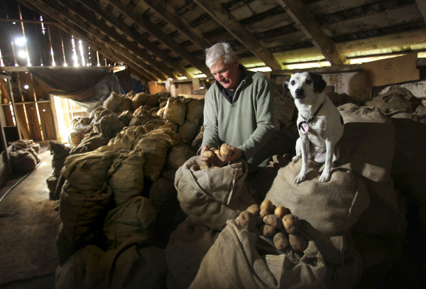 David Little, owner of Little Organic Farm, stores his potatoes in a darkened barn east of Petaluma.  (John Burgess/The Press Democrat)