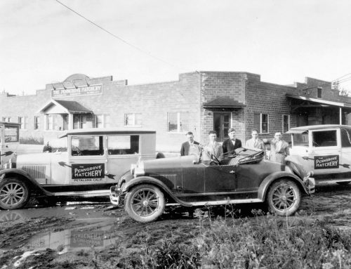 Old Redwood Highway: Penngrove, poultry boomtown